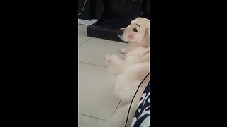 Kid gives dog adorably funny makeover