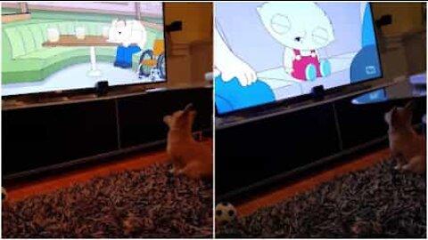 Tämä koiranpentu on valtava Family Guy -fani!