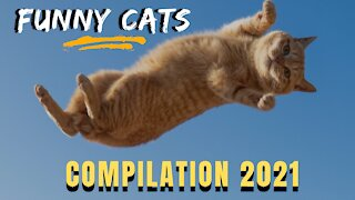 FUNNY CATS - COMPILATION 2021