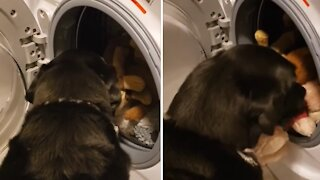 Dog saves his favorite stuffed animal from the washing machine