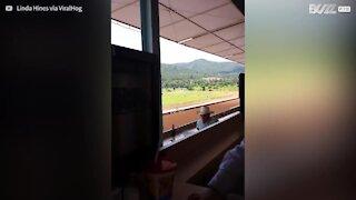 Il tifo entusiasta di un bimbo a una corsa di cavalli