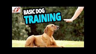 🐕 TOP 10 Essential Commands Every Dog Should Know! 🐕