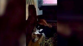 Cat Massages Dog Friend
