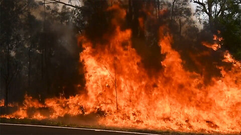 Australian Wildfires Believed to Have Affected Almost 500 Million Animals