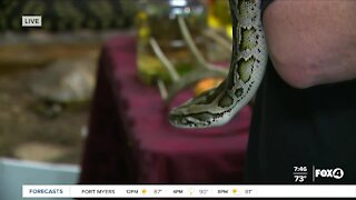 Friendly Forest Fall Festival at Calusa Nature Center in Fort Myers