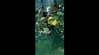 Swimming and hand feeding tornado of fish