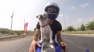 Hund elsker å reise på motorsykkeltur med eieren sin