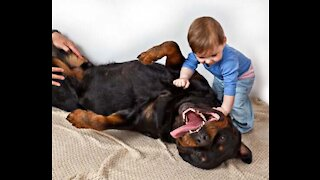 Rottweiler playing with surprising and funny child