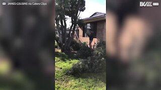 Un bûcheron amateur fait tomber une branche d'arbre sur une maison