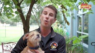 Pet Patrol Pasco Animal Services | Morning Blend