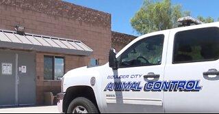 New effort underway to help Boulder City's seniors with pets