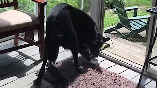 Dog Helps Bird Find Freedom