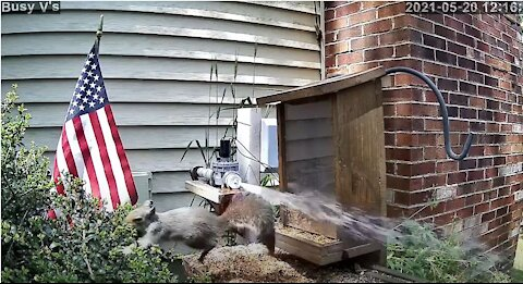 Flying Squirrels - Keep Them out of Bird Feeder with Artificial Intelligence