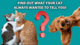 Find out what your cat always wanted to tell you!