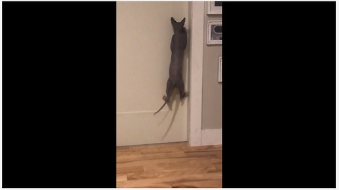 Problem-Solving Cat Learns How To Open Doors