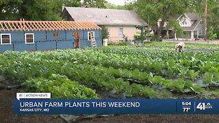 Urban farm plants this weekend