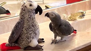 Sociable parrot makes friends with parrot stuffed animal