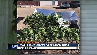 Marijuana grow operation bust in Racine County