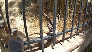 Glendale Police rescue deer trapped in fence
