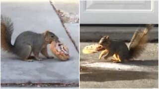 Squirrels fight over large pastry