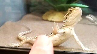 Gecko wants a High Five!