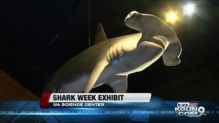 Flandrau center celebrating shark week