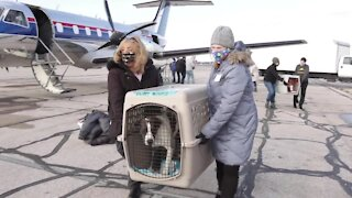 Michigan Humane Society receives more than 50 at-risk dogs from New Orleans