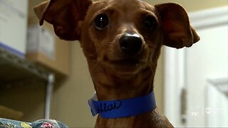 Dogs rescued in Louisiana find new forever homes in Tampa