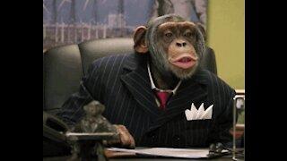 Who said that Godzilla would win? Monkeys rule