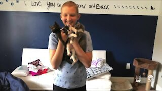 Port St. Lucie child cancer patient fosters dozens of kittens