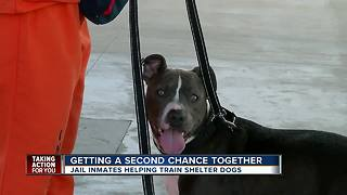 Inmates training shelter dogs has 100 percent success at making dogs more adoptable