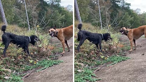 Crazy dogs help owner trim the trees