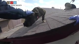 WATCH: Arizona Humane Society rescues dog from roof