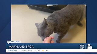 Maryland SPCA says Good Morning Maryland