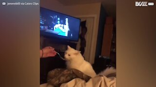 Hilarious reaction cat after eating ice cream!