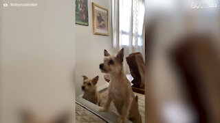 Hilarious slow motion of dog failing to catch treat