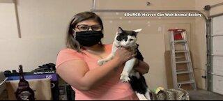 Cat found in Las Vegas reunites with California family