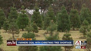 Kansas City metro could see Christmas tree shortage this year