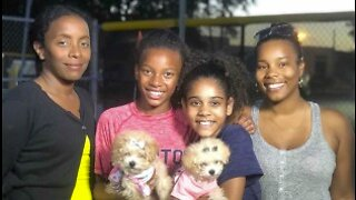 Boynton Beach family heals after tragedy by rescuing puppies
