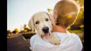 How to keep your dog safe during Las Vegas summer heat, when to walk them