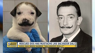 Rescued dog has mustache like Salvador Dali