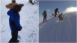 Dyr som elsker å leke i snøen
