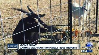 Five Fridges Farm in Wheat Ridge says goats were stolen