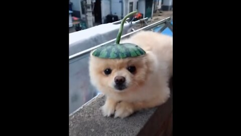 💗Cute And Funny Pets   Try Not To Laugh To These Pets Compilation #04💗