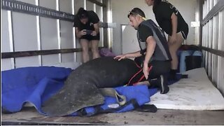Injured manatee rescued in Boynton Beach