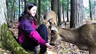 Girl entices wild deer from the forest to eat from her hand
