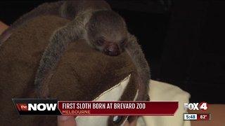 Florida zoo welcomes baby sloth