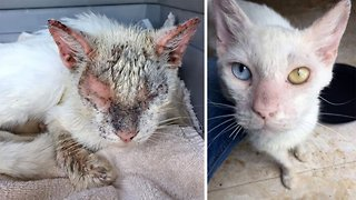 Neglected cat reveals beautiful eyes after dramatic transformation
