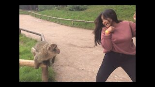 Super Funny Moments Human and Animals Fails, a must watch