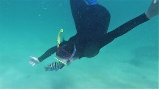 Feisty reef fish repeatedly attacks swimmer who gets too close